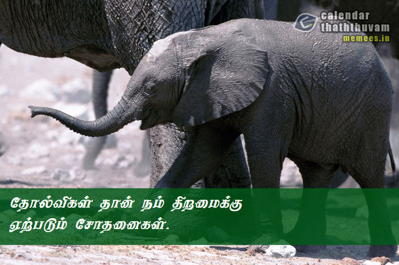 Tamil Philosophy Sad: The Philosophy of Sad In Tamil | Sad ...