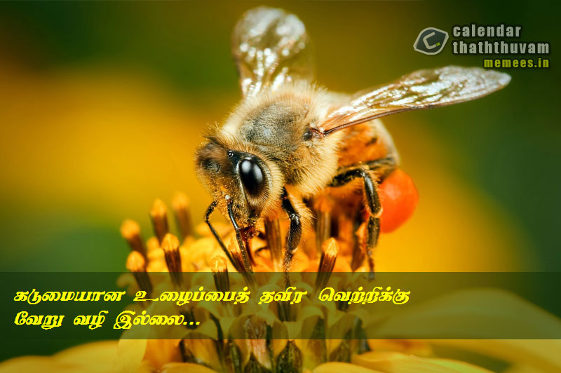 Work Quotes in Tamil